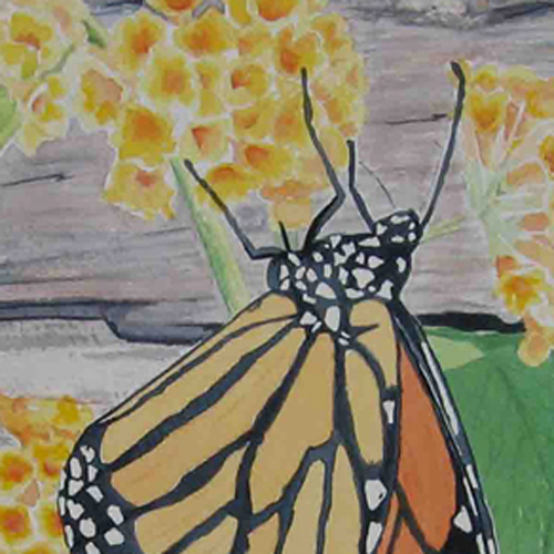 monarch watercolour